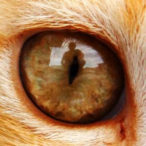 street-cat_bigpic